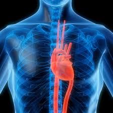 انواع دعامات القلب و اخر نجاح لدعامات تتحلل تلقائيا في الجسم موسوعة كيوبيديا العالمية