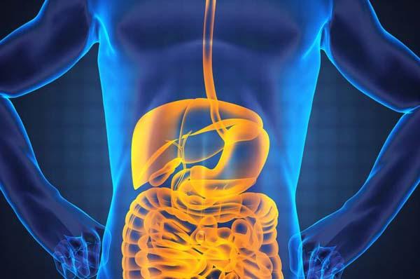 فوائد  تحدث في جسمك عند توقفك عن تناول اللحوم